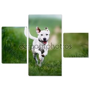 бегущая собака