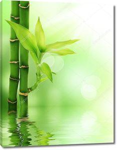 Бамбук с ростком в воде