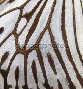 Макрос бабочки