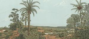 Пальмы у реки