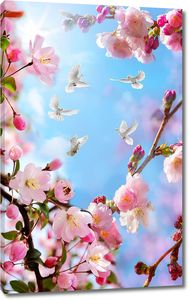 Яблоневая ветка в цвету