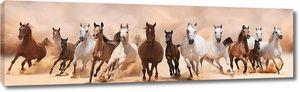 Лошади разного цвета на бегу