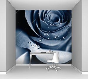 Роза с росой