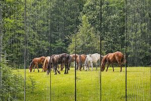 Лошади на лесной поляне