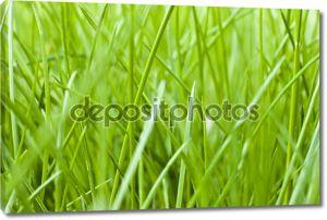 Весна трава текстуры