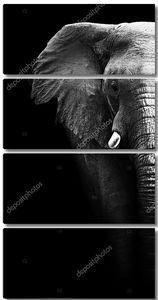 Черно-белый портрет слона