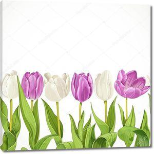 Белый и фиолетовый тюльпаны