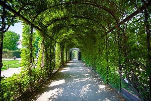 дорожка под зеленым природным тоннелем