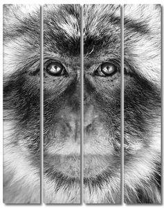 Черно-белый портрет обезьяна