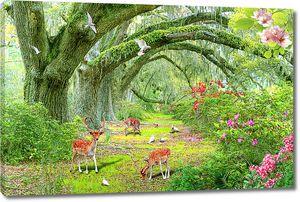 Косули в таинственном лесу