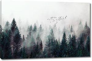 Туман по вершинам деревьев