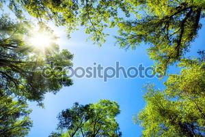верхушки деревьев, обрамление солнечный голубое небо.