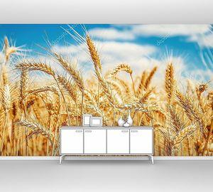 Золотая пшеница и голубое небо