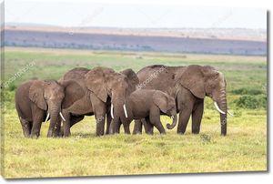 Слонята с родителями