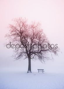 Зимнее дерево в тумане на рассвете