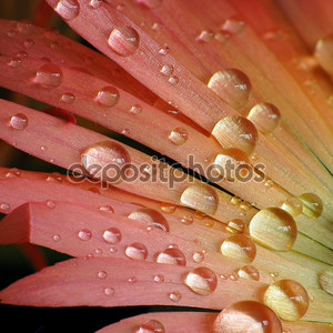 Капельки воды на красочный цветок