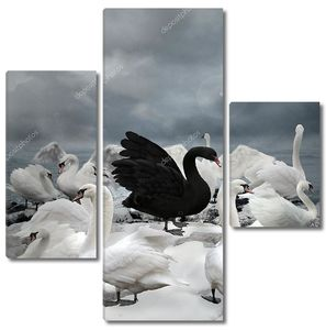 Черный лебедь