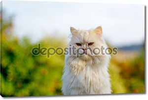 Персидская кошка на фоне зелени
