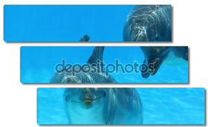 Два играющих дельфинов