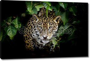 Портрет леопарда в кустах