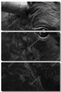 борьба с быком возглавляет деталь в черно-белых тонах