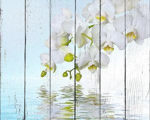 Красивый белый цветок орхидеи phalaenopsis, свое отражение в воде с copyspac