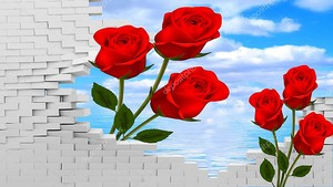 Красные розы в проломе стены
