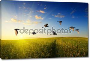 Поля и летящие птицы