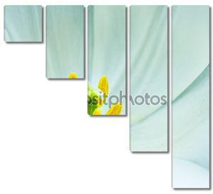 Крупный белый Красивый тюльпан