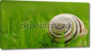 раковину улитки на траве, макро