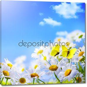Бабочки на ярких ромашках