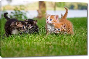Четыре маленькие котята в саду