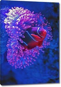 Яркая рыбка в кораллах