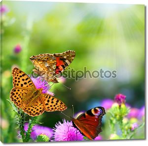 Бабочки на цветах летом