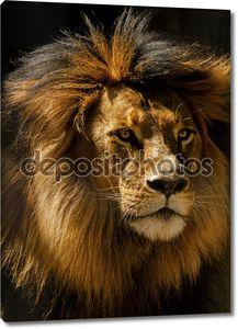 крупный план мужчины льва