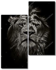 высокомерный Лев