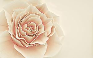 Кремовая большая роза