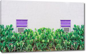 Грядка кактусов
