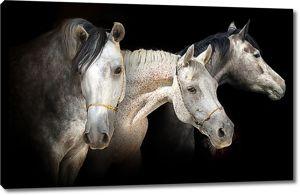 Пегие лошади