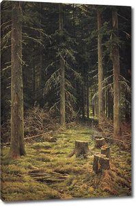 Иван Шишкин. Хвойный лес