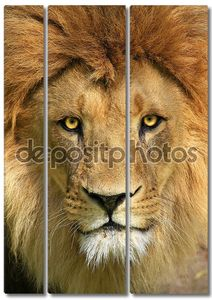 Лев красивый портрет