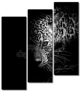Серьезный леопард
