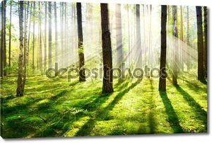 Утренний туман. Туманный и туманный лес