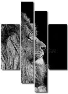 Портрет Льва на черно-белом