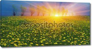Весенние цветы одуванчики в Карпатах