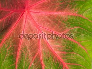 Красочные зеленый и розовый лист