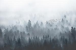 Спустившийся туман