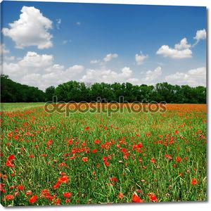 A poppy field in bright sunny day. Krasnodar, Russia
