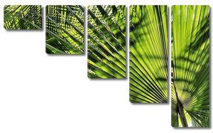 Широкие пальмовые листья