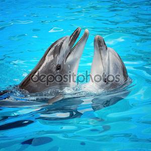 Парочка дельфинов в бассейне